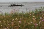 Hier noch aus sicherer Entfernung eingefangen: Das Schiffswrack vor Braderup. | 50mm | f8 | 1/320 | ISO 100